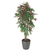 Artificial plant Capensia for inside + pot